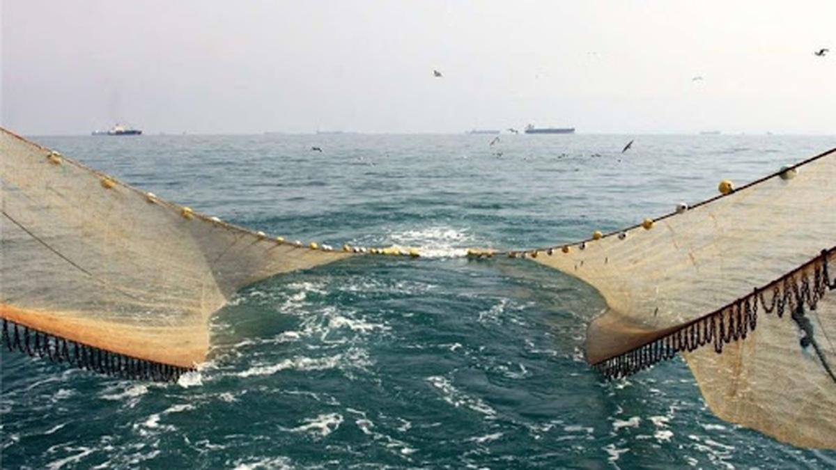 صید ترال، به نام چین به نام اشخاص و شرکتهای ایرانی